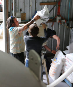 Mash Collective brewers in action, milling grain