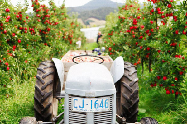 The Willie Smith's orchard in Huon Valley