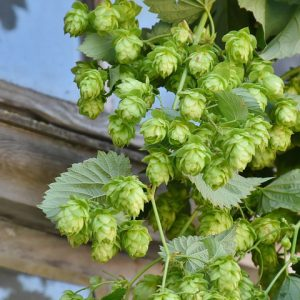 HPA's Green Hop Program returns