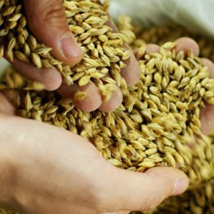 malt malting cryer malt bintani weyermann bestmalz grain