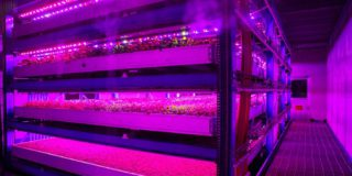 Terella vertical farm